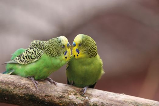 Two green birds